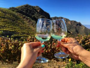 Malibu Wine Safari